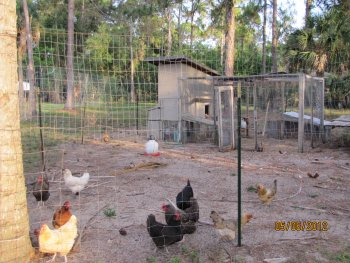 Front side with taller chicken fence