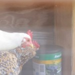 Mobile chicken waterer