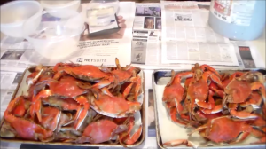 Ready to clean the cooked blue crab