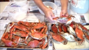 Pulling off the crab claws