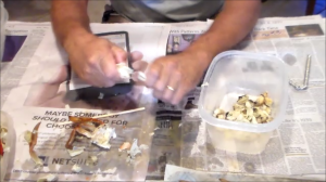 Separating crab meat from the body
