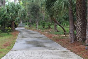 Cordless Blower Tackles Pine Needle Covered Driveway