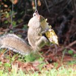 Squngee Squirrel Feeder